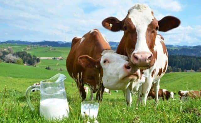 Mleka lepiej unikać przy trądziku